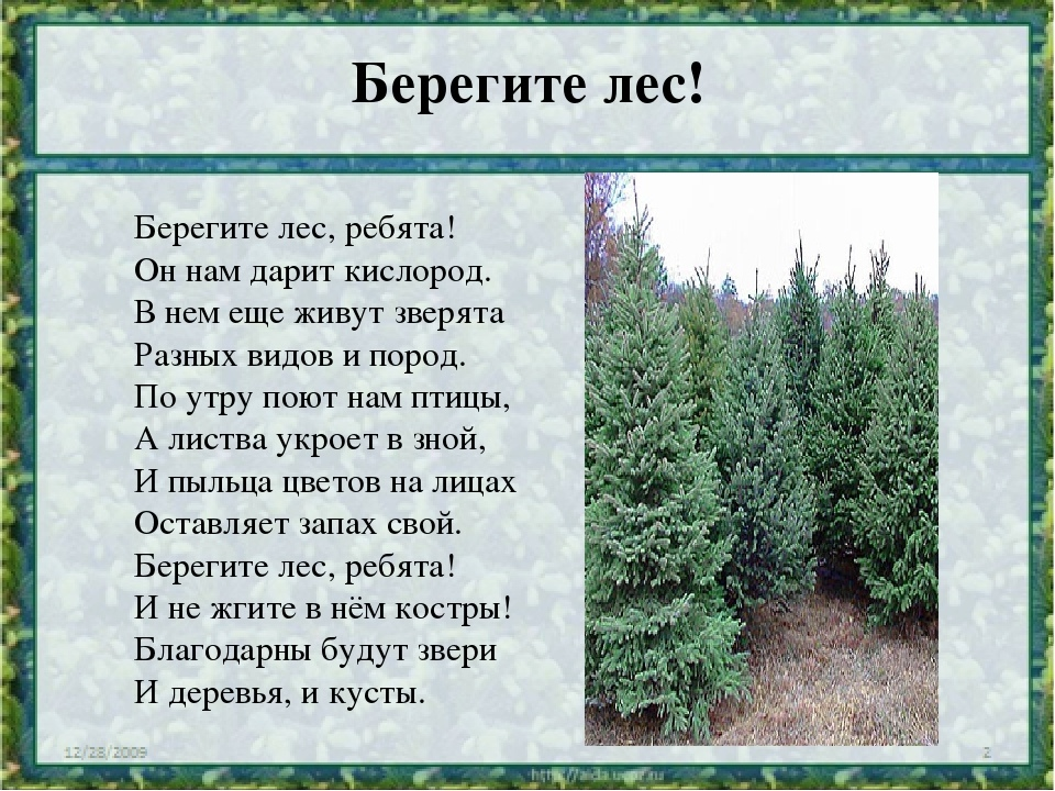 Русский лес - край чудес